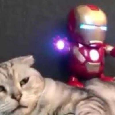 Um gato e o seu Iron Man