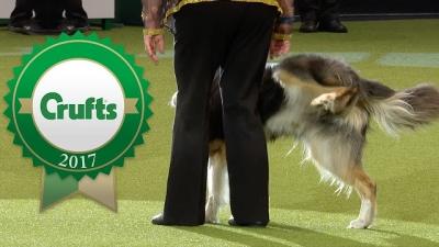 Os melhores fails das competições caninas