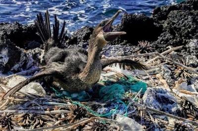 Plástico na água do mar, praias e animais de Galápagos
