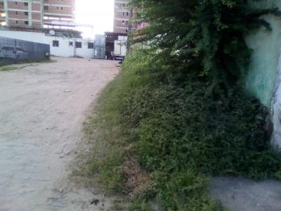 Rua tomada pelo mato