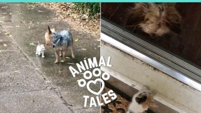 Cachorro resgata gatinho abandonado e o adota na hora