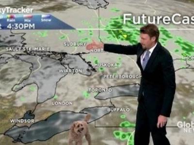 Cão invade previsão do tempo ao vivo na TV