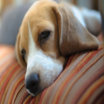 Vermifugação é importante? Saiba como proteger o seu pet contra parasitas