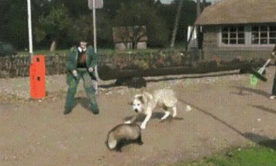 Eu te salvo meu dono!