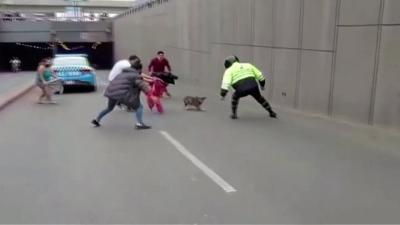 Cadela foge de casa, dribla policiais, e interrompe trânsito no Peru