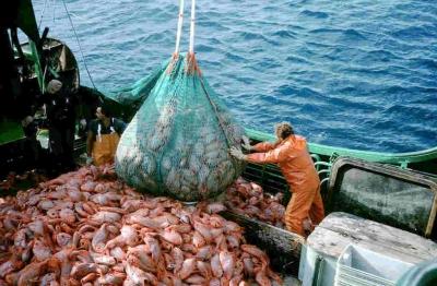 Verificando os fatos: os oceanos ficarão sem peixes até 2048?
