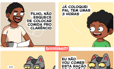 Gatos e suas preferências
