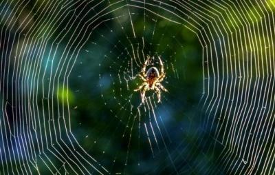 Seda sintética de aranha pode ajudar com problema de poluição plástica