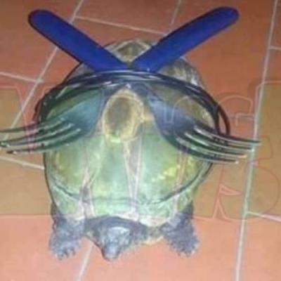 Tartarugas Ninjas de baixo orçamento