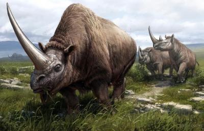 Geneticistas mapeiam árvore genealógica dos rinocerontes