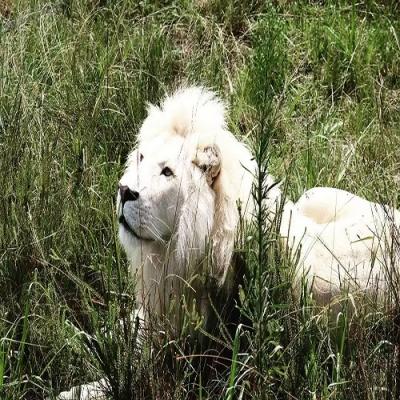 Veja 10 incríveis animais albinos