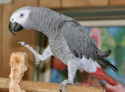 Pessoas compartilham as coisas mais engraçadas que seus papagaios disseram