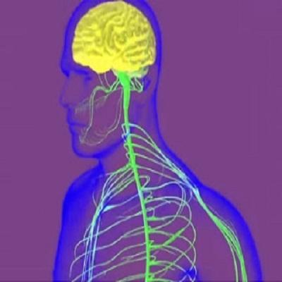 Uma viagem através do seu sistema nervoso