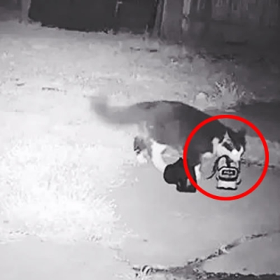"""O curioso caso de Jordan, o gato gatuno que """"roubava"""" calçados dos vizinhos"""