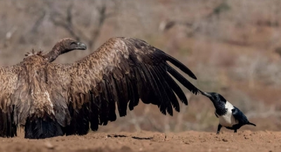 As melhores fotos de pássaros que você vai ver