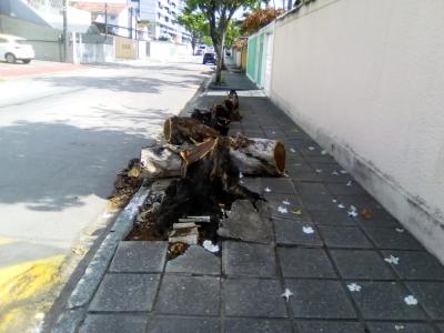 Troncos na calçada