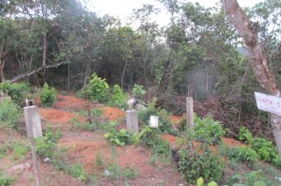 Destruição do verde em Itamaracá