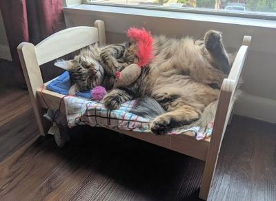 Gatos mimados que tem uma vida melhor do que a sua