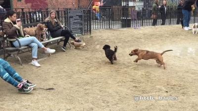 Seria esse o cachorro mais rápido do mundo?