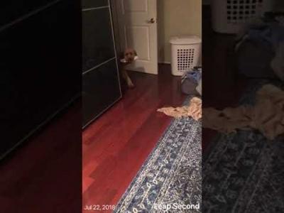 Esse cão nunca vai pra cama sozinho