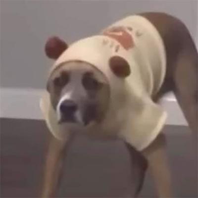 Cansei de ser um cachorro