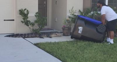 Homem prende jacaré em lata de lixo na Flórida
