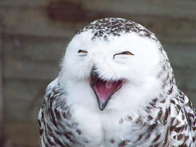 Quais animais podem rir?