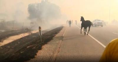 Cavalo salva dois cavalos de incêndio florestal