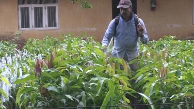 Ingestão de pesticidas é responsável por um em cada cinco suicídios no mundo