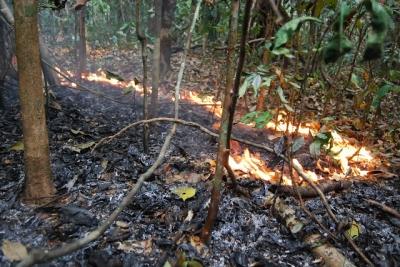 Epicentro das principais secas e incêndios na Amazônia causou 2,5 bilhões de Árv