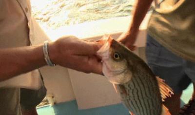 Pescando uma surpresinha