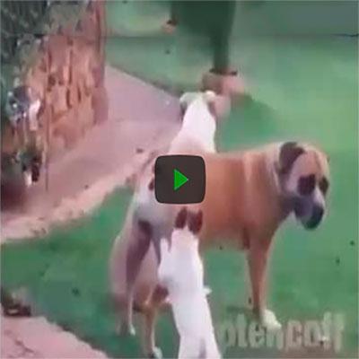 Não existe missão impossível quando se trata de um cachorro querendo safadeza