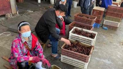 A equipa da OMS que investiga as origens do vírus, impedida de entrar na China