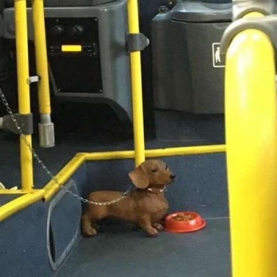 Cachorro paga passagem ?