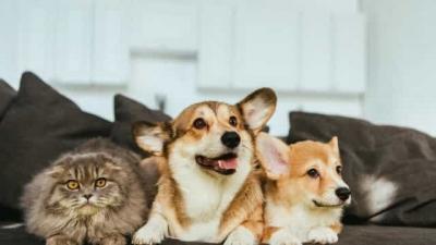 Cientistas alertam: Animais podem necessitar de vacinação contra Covid