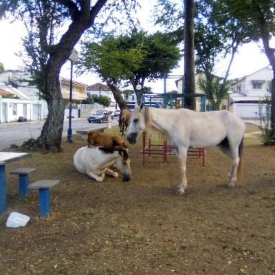 Praça dos cavalos e outros descasos