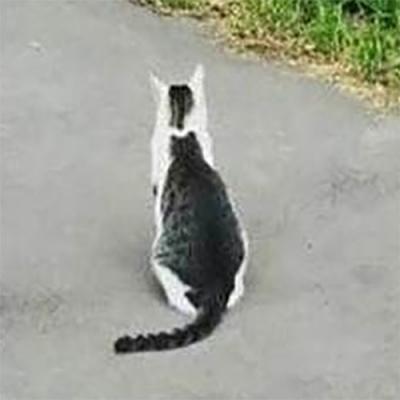 Um gato dentro de outro gato