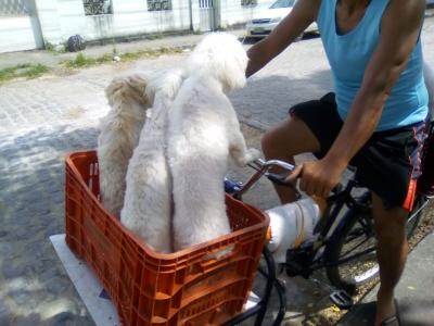 Cachorros bem tratados pelo dono dos animais