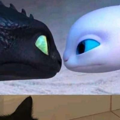 Se gatos fossem dragons, cenas como essa seriam mais comuns