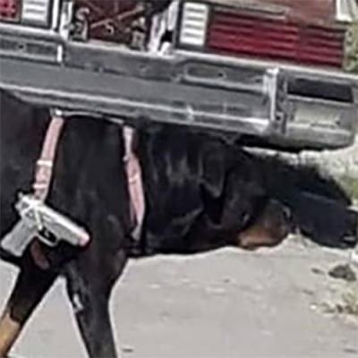 O segurança do bairro