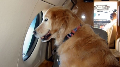 Não gosta de cães e gatos? Cuidado com os voos da Gol