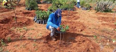 Três mil mudas plantadas para reflorestamento