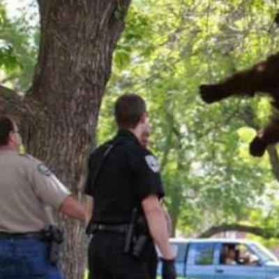 O resgate do Urso