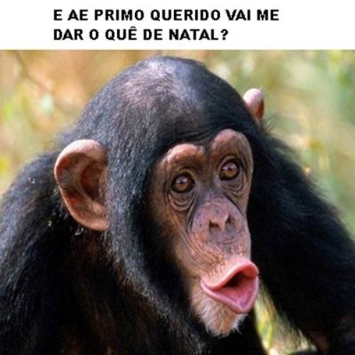 Macaco pedindo presente gif
