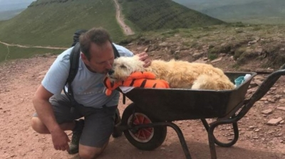 Dono leva seu cachorro doente para um último passeio
