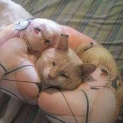 o travesseiro do gato
