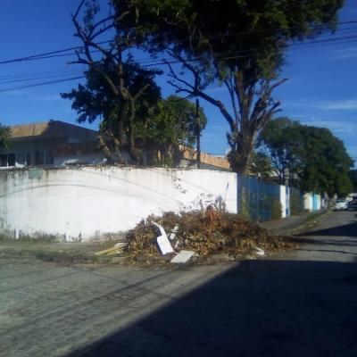 Corte de uma árvore