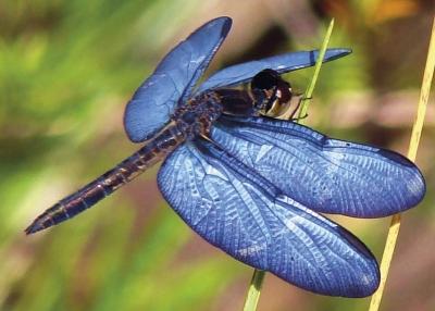"""A extinção de espécies de insetos indica """"colapso da natureza"""