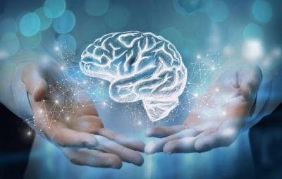 Minicérebros criados em laboratório podem desenvolver consciência