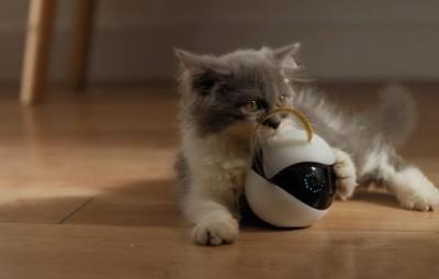 Robô brinca com o seu gato enquanto você não está em casa
